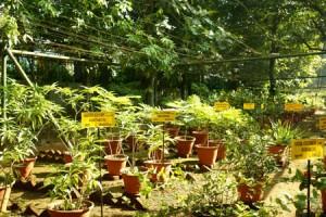 Kottakkal_Ayurveda_Arya_Vaidya_Sala_Demonstration_Garden_2