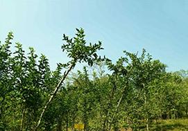 Kottakkal_Herbal_Garden_1