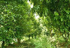 Kottakkal_Herbal_Garden_2